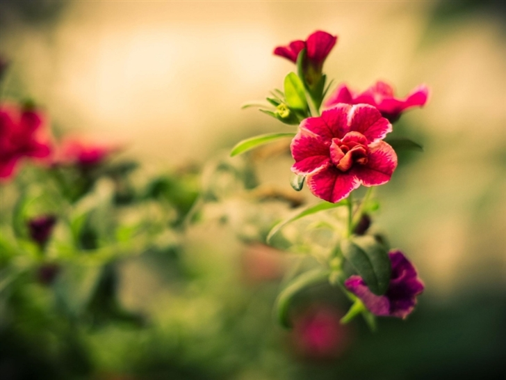 Red Blurry Flower Mac Wallpaper Download Free Mac Wallpapers Download