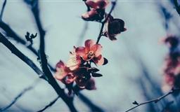 Spring Blossom Mac wallpaper