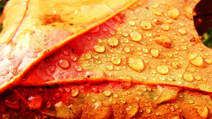 Wet Leaf Mac Wallpaper