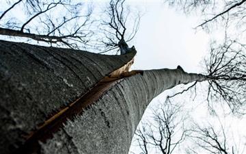 Split Tree Mac wallpaper