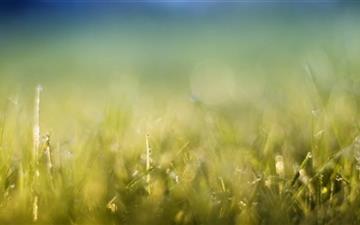 Grass Meadow Mac wallpaper
