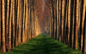Path Lined With Trees Mac wallpaper