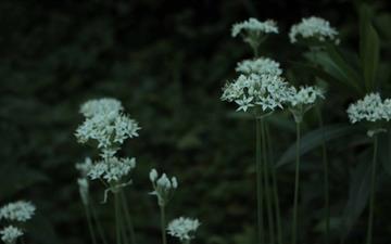 White Flowers Garden Mac wallpaper