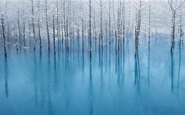 Swamp Winter Mac wallpaper