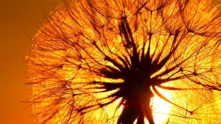 Dandelion And Sun Mac Wallpaper