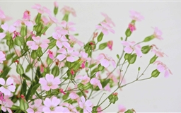Cute Pink Flowers Mac wallpaper