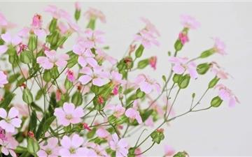 Cute Pink Flowers Mac wallpaper