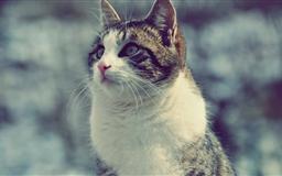 The Snowcat Mac wallpaper
