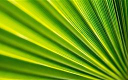 Fan Leaf Mac wallpaper