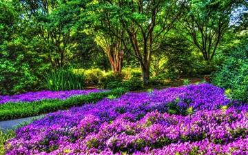 Purple Garden Mac wallpaper