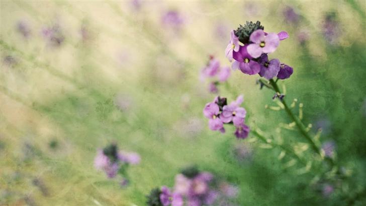 Field Flowers Mac Wallpaper