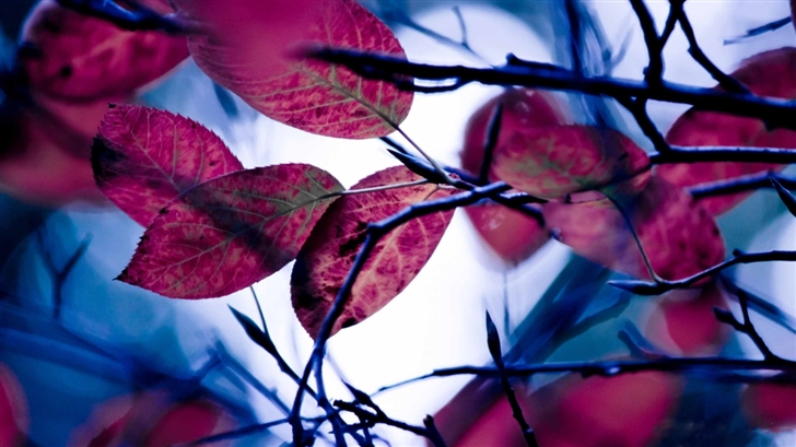 Purple Leaves Bokeh Mac Wallpaper