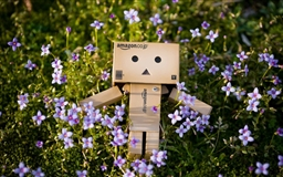 Spring Danbo Mac wallpaper