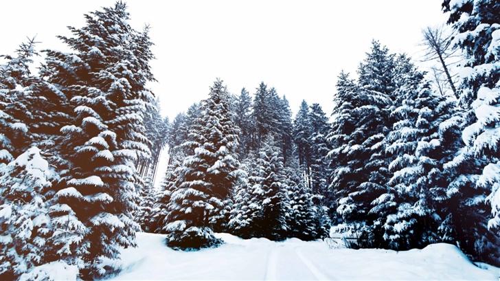 Winter Landscape Mac Wallpaper
