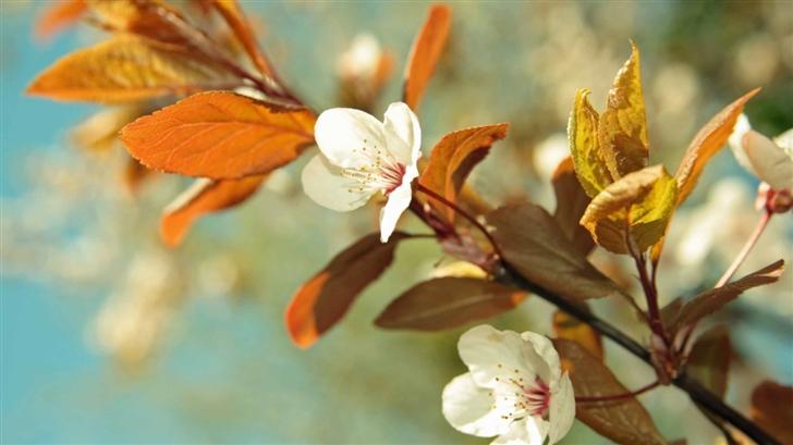beautiful Tree Blossoms Mac Wallpaper