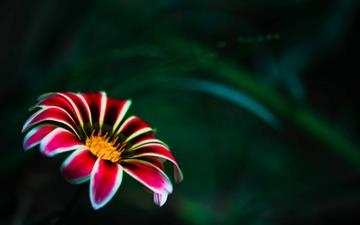 Flower With Red Petals Mac wallpaper