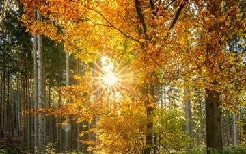 Forest Light Rays Mac wallpaper