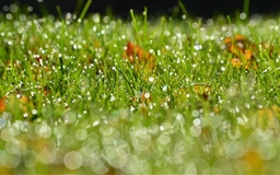 Grass Bokeh Mac wallpaper