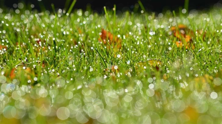 Grass Bokeh Mac Wallpaper