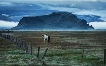 Horse In Open Field Mac wallpaper