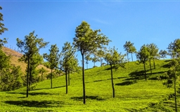 Munnar Hills Mac wallpaper
