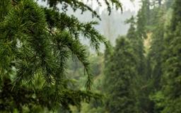 Finding Nature Mac wallpaper