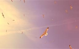 Flying Seagulls Mac wallpaper