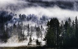 Foggy Forest Mac wallpaper