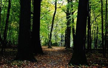 Forest In Dam Woods Mac wallpaper