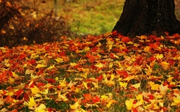 Red And Yellow Autumn Leaves Mac wallpaper