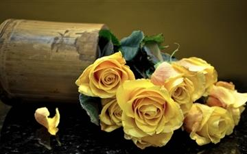 Yellow Roses Mac wallpaper