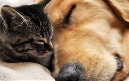 Cat And Dog Friendship Mac wallpaper