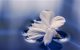 Flower Floating On Water Mac wallpaper