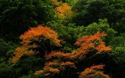 Forest Trees Mac wallpaper
