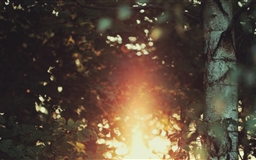Golden Light Bokeh Mac wallpaper