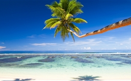 Palm Tree Over Tropical Beach Mac wallpaper
