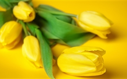 Easter Flowers Mac wallpaper