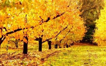 Golden Orchard Mac wallpaper