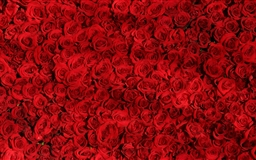 Love Red Roses Background Mac wallpaper