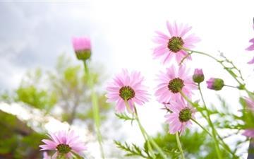 Summer Flowers Bloomin Mac wallpaper