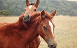 The Horses Mac wallpaper