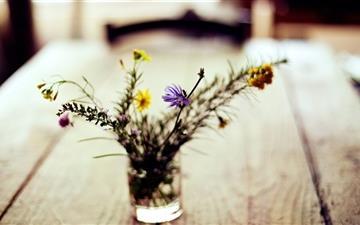 Summer Flowers Mac wallpaper
