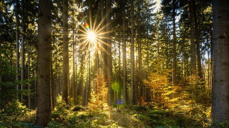 Morning Sun Rays Forest Mac Wallpaper