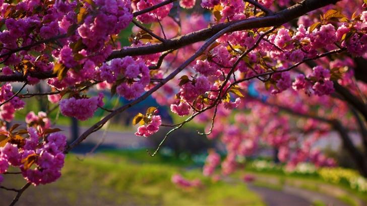 Spring Walk Away Mac Wallpaper