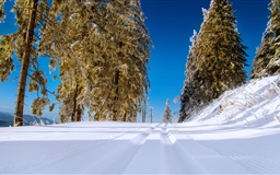 Winter Snowy Road Scenery Mac wallpaper