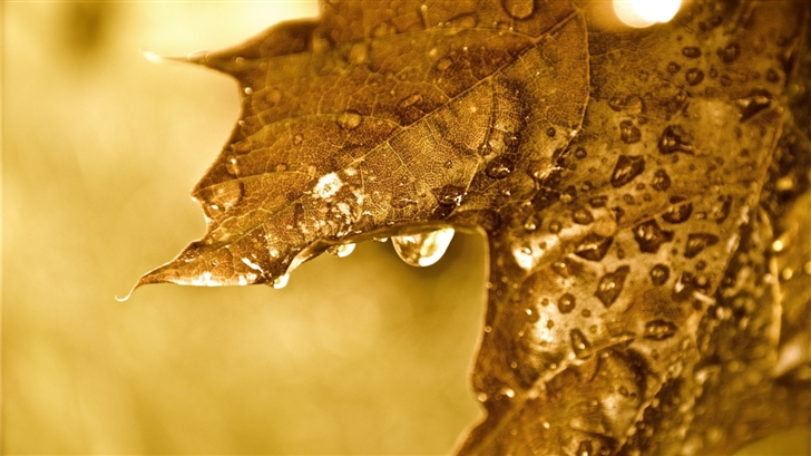 Dripping Golden Leaf Mac Wallpaper