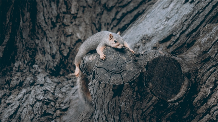 Exhausted Squirrel Mac Wallpaper