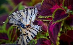 Butterflies In Love Mac wallpaper