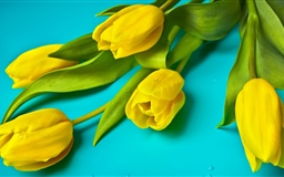 Beautiful Yellow Tulips Mac wallpaper