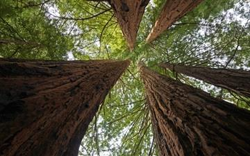 Big Basin Redwoods State Park Mac wallpaper